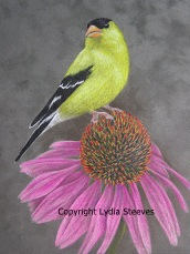 American Goldfinch and Coneflower CP e-Packett