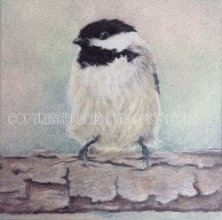 Chickadee Study Video